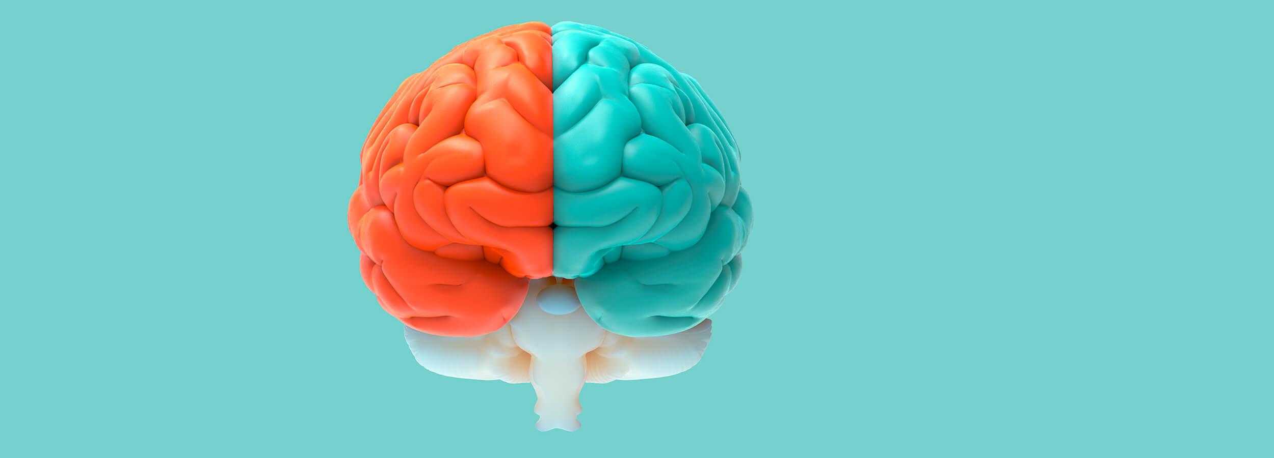 como funciona tu cerebro